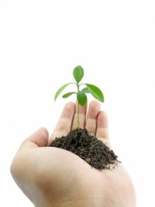Soigner le stress par les plantes