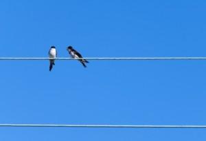 couple d'oiseaux sur un fil