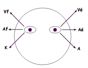 Les clés d'accès visuelles VAK