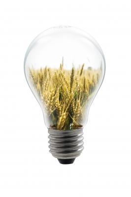 Les plantes d polluantes pour la maison - Plante contre l humidite dans la maison ...
