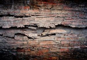 mur budgétaire américain