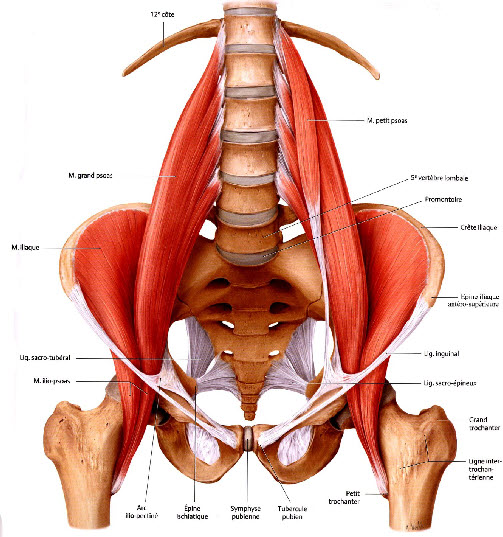 muscle psoas douloureux
